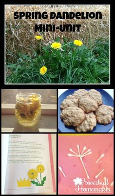 Spring Dandelion Unit - arts, science, nature, poetry, and more! Such a fun way to explore spring together! PreK-K