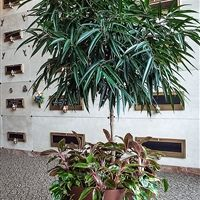 Botanicus Award Winning Design Landscaping Design, Office Plants, Tropical  Plants, Indoor Plants,