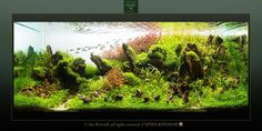 by Stu Worrall Nature Aquarium, Planted Aquarium, Aquascaping, Takashi Amano, Aquatic Plants, Freshwater Aquarium, Driftwood, Fresh Water, Fish