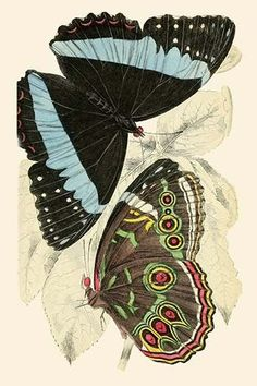 European Butterflies & Moths