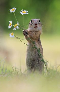 Pin by Korinna Dominguez on Tiere | Pinterest | Ground squirrel, Squirrel and Flowers