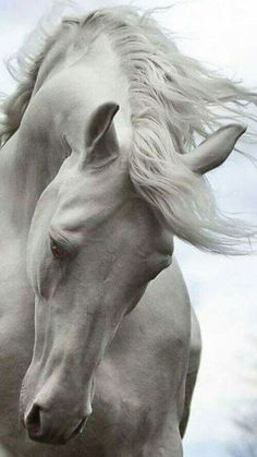 When I see these beautiful white animals, I think of God's animals in heaven.