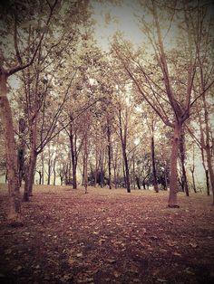 El bosque es muy bonito y muchas animales viva en lo.
