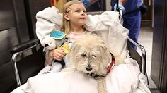 """Lifesaving Service Dog Sniffs Out Girl's Disease, Even in Operating Room. ~  """"The dog, JJ, singlehandedly has done more than any medical person has done,"""" the girls mother said. """"JJ has given her a new lease on life and the ability to lead a normal life."""" click for whole story."""