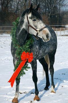 Festive Christmas horse