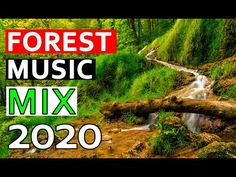 Forest Music | Magical forest music Elven Woods Forest Sounds | Woodland Ambience Bird Song 2020 - YouTube Rain Music, Yoga Music, Meditation Music, Music Mix, Rain Sounds, Sound Of Rain, Forest Sounds, Dream Music, Magical Forest