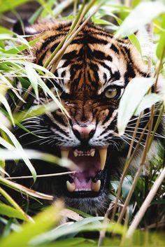 50 beautiful wild animals CutesyPooh – 50 … - Top Of The World Nature Animals, Animals And Pets, Wild Animals Photos, Animals Planet, Beautiful Cats, Animals Beautiful, Big Cats, Cats And Kittens, Regard Animal