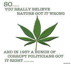 The Truth, Marijuana and Politics