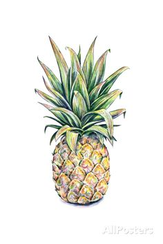 Pineapple on a White Background. Watercolor Illustration Art Print at AllPosters.com