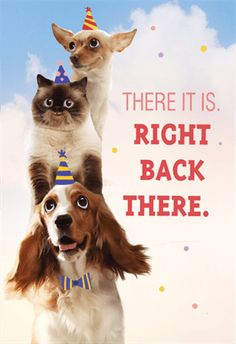 """Stacked Pets"" printable card. Customize, add text and photos. Print for free!  #free #birthday #card #printable"