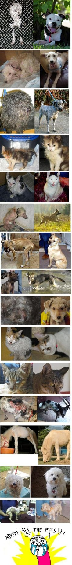 Before and after photos of rescued animals.