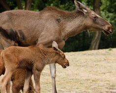 Celebrating moms: 19 cute animal babies - Betas babies