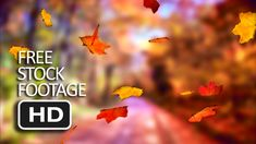 Free Stock Video Footage - Falling Autumn Leaf (Tree Background) HD Free Stock Footage, Free Stock Video, Backgrounds Free, Video Footage, Autumn Leaves, Movie Posters, Image, Fall Leaves, Film Poster