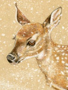Deer  White Tailed Doe 8 x 10 inch Giclee Art Print by roxy5235, $19.99 #deer #bambi #christmas