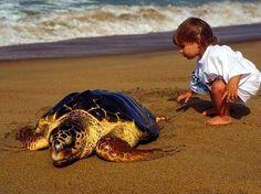 Дальян и черепахи Каретта Каретта http://uzumlu.ru