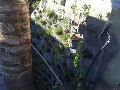 2da etapa prueba de riego - plantado.#grjardinesurbanos
