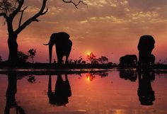 Silhouettes of animals at sunset