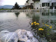 A swimming pond in Switzerland