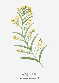 Goldenrod: Encouragement Flower Language Art by BottomleyCottageYou can find Language arts and more on our website.Goldenrod: Encouragement Flower Language Art by Bottomley. Botanical Flowers, Botanical Prints, Art And Illustration, Illustrations, Nursery Art, Nursery Decor, Watercolor Flowers, Watercolor Paintings, Watercolor Drawing