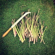 via @welbeckfarmshop: Amazing local asparagus the wonderful growing season is upon us and the shop is starting to fill with abundant locally grown veg. Come down and support your local farmers #local #seasonal #asparagus #farmtofork