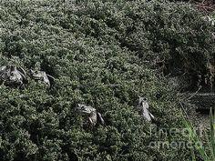 Fine Art Photography/Digital Art by Margaret Newcomb - FROGGIE MAZE - #frogs #art #maze #prints #posters