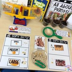 All About Plants - Science for Little Learners (preschool pre-k & kinder) Make learning all about Plants and Seeds fun and hands on in your classroom! Includes printables vocabulary cards book anchor charts and real photosand more. Seeds Preschool, Science Center Preschool, Creative Curriculum Preschool, Preschool Garden, Kindergarten Science, Preschool Classroom, Preschool Activities, Science Centers, Kid Science