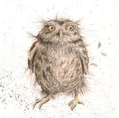 'What a Hoot' available now from Wrendale Designs.