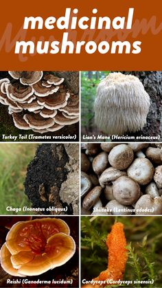 Recent trends have started to discuss the power of medicinal mushrooms. Are these fungi worth all the Internet hype? In short: Yes! In this post, I'll be giving an overview of some of the scientifically-proven benefits of medicinal mushrooms. Mushroom Grow Kit, Mushroom Tea, Mushroom Species, Adhd Diet, Paleo Mom, Healthy Nutrition, Healthy Recipes, Healing Herbs, Plant Based Diet