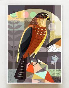 New Zealand native Karearea print Graphic Illustration, Illustrations, Graphic Art, School Murals, Nz Art, Bird Artwork, Native Art, Indian Art, New Zealand