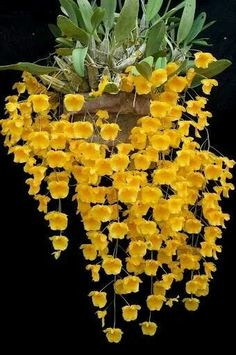In #orchid family #Orchids http://growingorchids.biz/