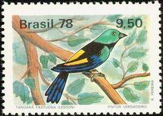 Seven-coloured Tanager (Tangara fastuosa)