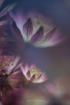 #Macro #Fleurs #Photographie #Rose ©Lumi Poullaouec