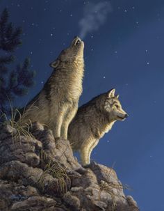 Moonlight Serenade Grey Wolves Larry Zach Wildlife Art - The Wolves In Moonlight Serenade Gray Wolves Are The Alpha Male And Alpha Female Of A Pack Wolves Howl To Assemble The Pack Usually Before And After Hunts To Pass On An Alarm Particularly At A Wolf Images, Wolf Pictures, Dog Shots, Wolf Painting, Fantasy Wolf, Beautiful Wolves, Animals Beautiful, Wolf Spirit, Spirit Animal
