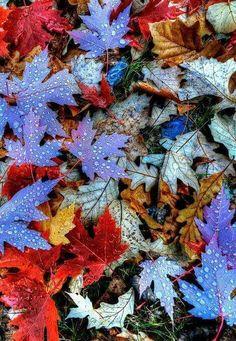 Super Ideas For Wallpaper Winter Autumn Leaves Fall Images, Jolie Photo, Fall Halloween, Autumn Leaves, Fallen Leaves, Blue Leaves, Colored Leaves, Autumn Rain, Autumn Cozy
