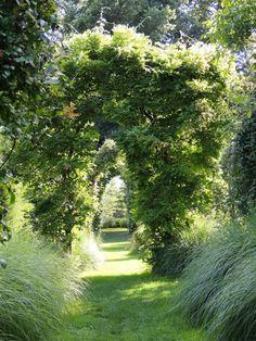Side Yards, Garden Gates, Green Plants, Pathways, Water Features, Beautiful Gardens, Garden Landscaping, Perennials, Greenery