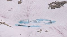 What Creates These Bright Pink Streaks in the Snow? - Earth and Environmental Science