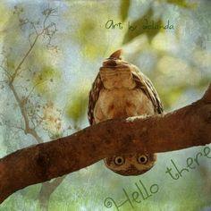 (¯`•.•´¯)¸•´¯` .`•.¸¸....'Jolanda's pictures