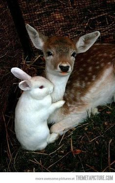 15 Animal Hugs to Lift Your Spirits [PICS] Baby deer and a rabbit More Related posts:L'Esprit des Animaux à l'AquarelleDeer patronus – Totem Animal – Pocket watch or necklace – Victorian Steamp. Cute Creatures, Beautiful Creatures, Animals Beautiful, Cute Little Animals, Cute Funny Animals, Nature Animals, Animals And Pets, Baby Farm Animals, Animal Babies