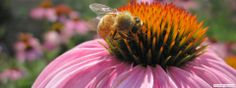 Project Apis m. — Enhancing the Health of Honey Bees