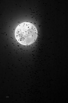 Black Night Sky and Birds