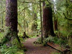 north america forest - Google Search