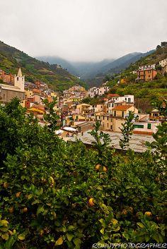 Riomaggiore, Cinque Terre, ! Province of La Spezia , Liguria Italy