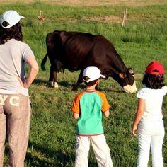 Ecoturista? Yo mism@!  #AgroturismoEcologico #Ecogastronomia #Ecoturismo #GastronomiaEcologica #PatrimonioNatural #TurismoEcologico #TurismoResponsable  #TurismoRuralEcologico #TurismoSostenible Cow, Animals, Sustainable Tourism, Get A Life, Animaux, Animal, Animales, Animais