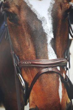 Horse http://www.wpsubscribers.com/?hop=topogiyo  http://www.desktoplightingfast/Zorro123 http://www.laptoptrainingcollege.com