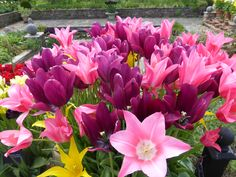 Really a riot of colour Spring Flowering Bulbs, Spring Bulbs, Colour, Garden, Plants, Color, Garten, Green Onions, Gardening