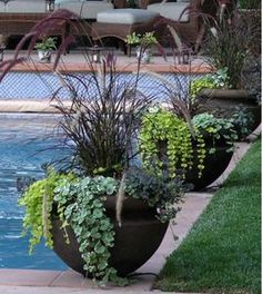 Container Gardening Ideas Plants for Containers in the Sun. My favorite perennial for pots in the sun — sedums of all types. I also love grasses with trailing plants, the photo right being a stunning example of combination. Outdoor Plants, Outdoor Gardens, Plants By The Pool, Potted Plants Patio, Pot Jardin, Dream Garden, Lawn And Garden, Garden Pots, Diy Garden