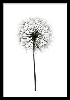 Fin botanisk tavla som passar fint till svart vit inredning