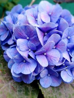 Hydrangea Garden, Green Hydrangea, Hydrangea Flower, Flowers Nature, Purple Flowers, Beautiful Flowers, Virtual Flowers, Flower Aesthetic, Pretty Wallpapers