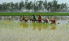 No advancement for Telangana farmers in rabi crop prospects Read complete story click here http://www.thehansindia.com/posts/index/2015-02-27/No-advancement-for-Telangana-farmers-in-rabi-crop-prospects--134190