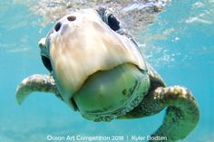 The winners of the annual Ocean Art Underwater Photo Contest have been revealed. The awards showcase the best in underwater photography and shine a light on what lurks in the depths of the sea. Cute Baby Animals, Animals And Pets, Funny Animals, Underwater Photography, Animal Photography, Nature Photography, Photography Guide, Film Photography, Street Photography